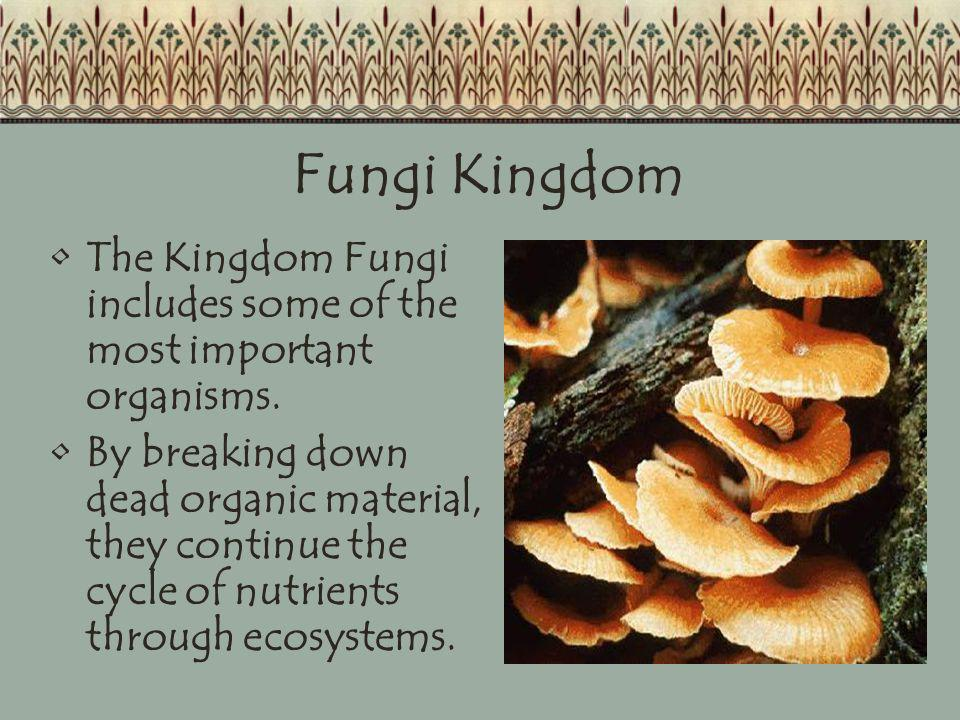 Fungi Kingdom The Kingdom Fungi includes some of the most important organisms.