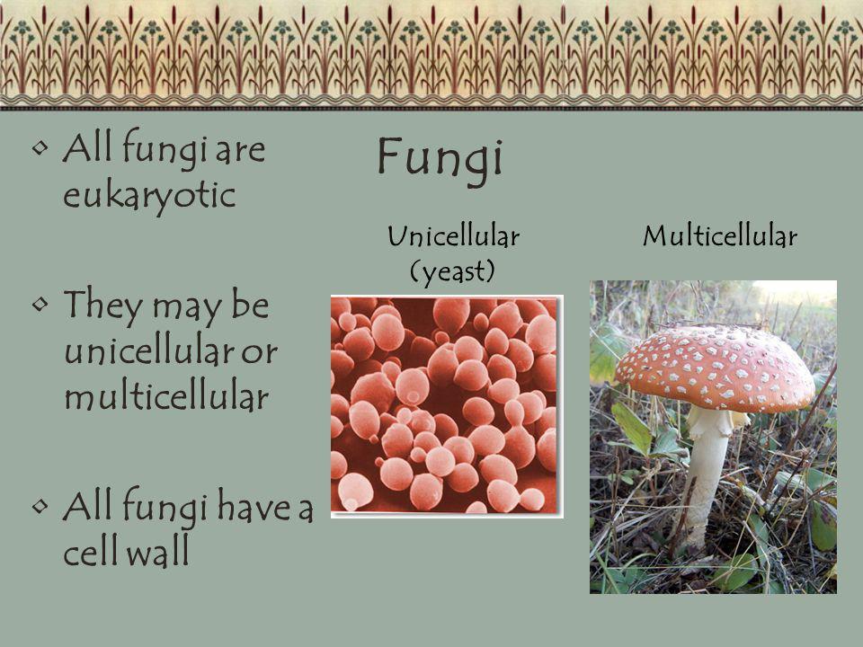 Fungi All fungi are eukaryotic