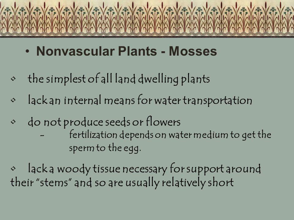 Nonvascular Plants - Mosses