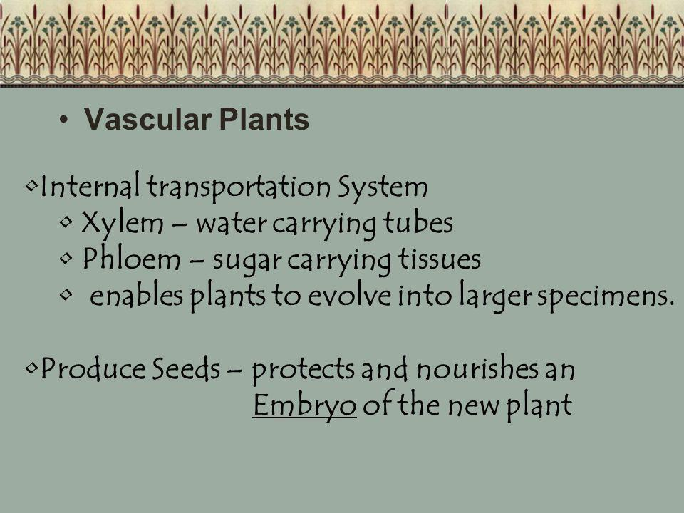 Vascular Plants Internal transportation System. Xylem – water carrying tubes. Phloem – sugar carrying tissues.