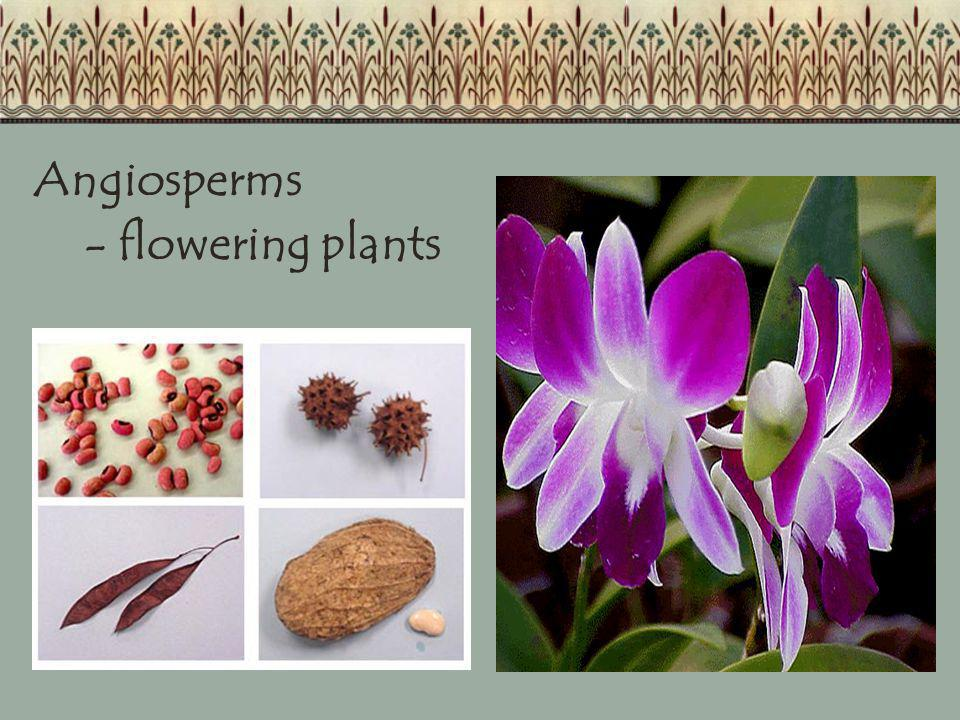 Angiosperms - flowering plants