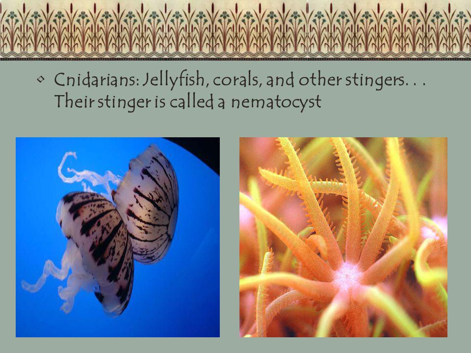 Cnidarians: Jellyfish, corals, and other stingers