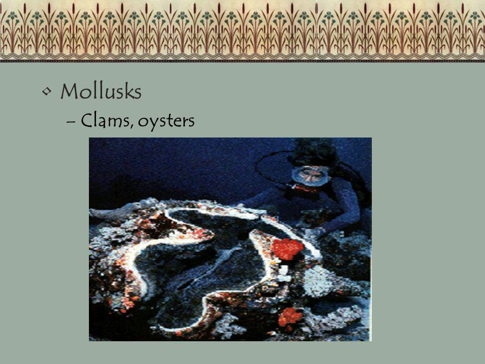 Mollusks Clams, oysters