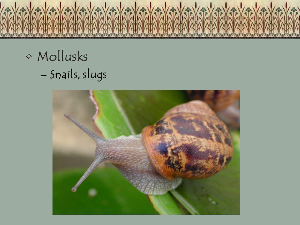 Mollusks Snails, slugs