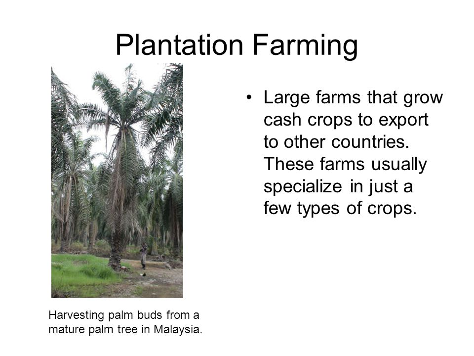 Plantation Farming Large farms that grow cash crops to export to other countries. These farms usually specialize in just a few types of crops.