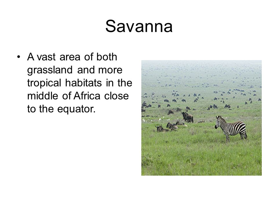 Savanna A vast area of both grassland and more tropical habitats in the middle of Africa close to the equator.