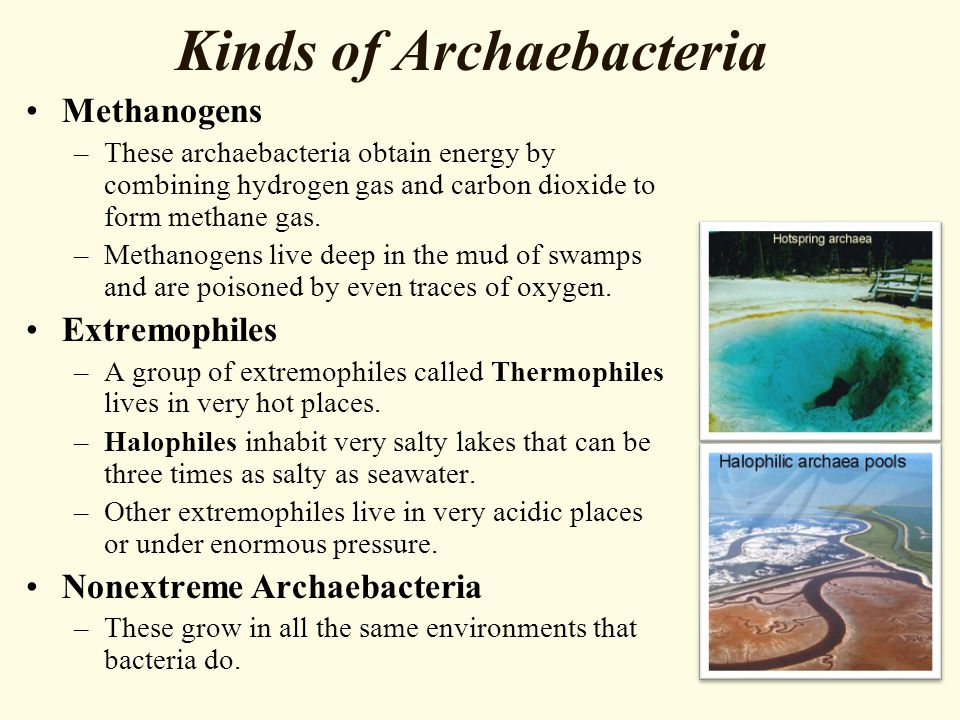 Kinds of Archaebacteria