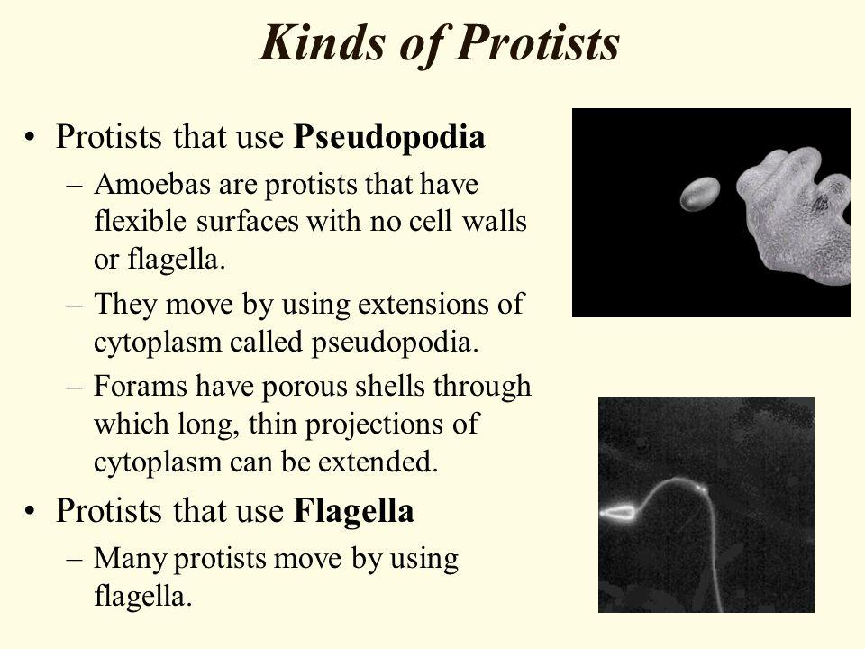 Kinds of Protists Protists that use Pseudopodia