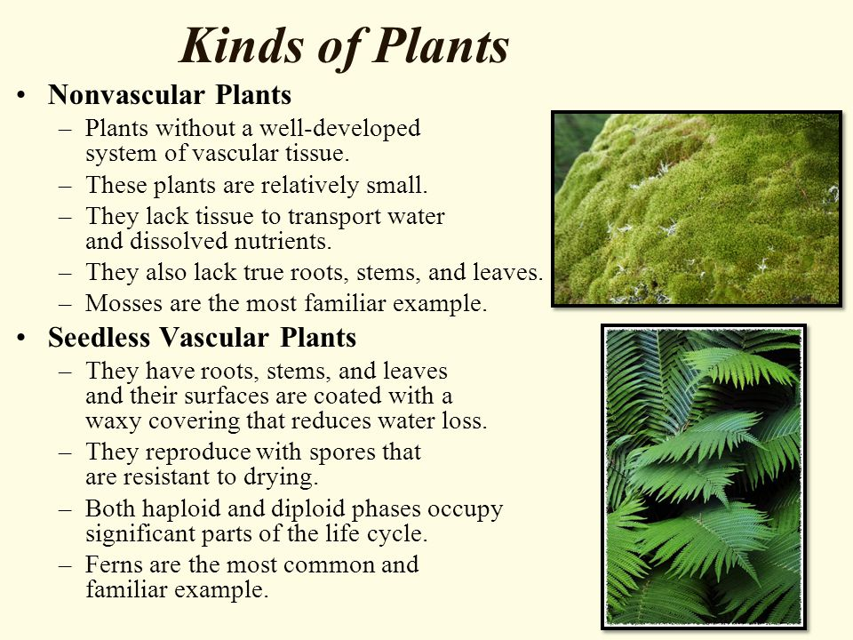 Kinds of Plants Nonvascular Plants Seedless Vascular Plants