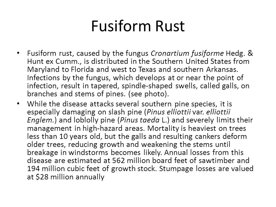 Fusiform Rust