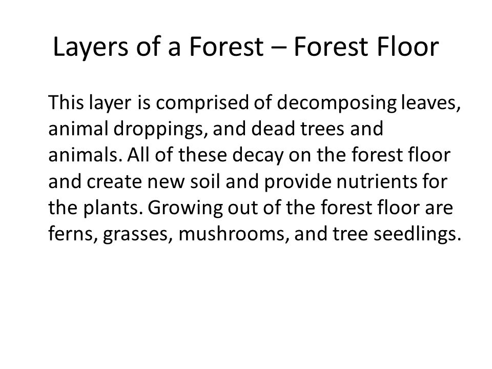 Layers of a Forest – Forest Floor