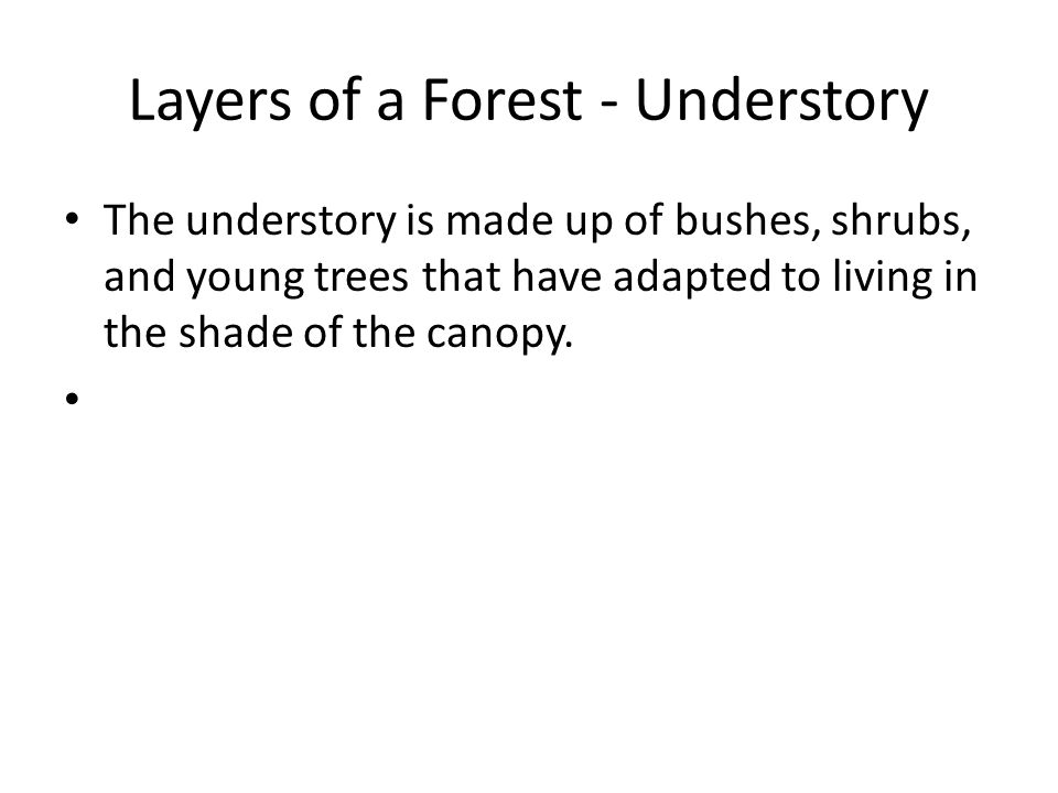 Layers of a Forest - Understory
