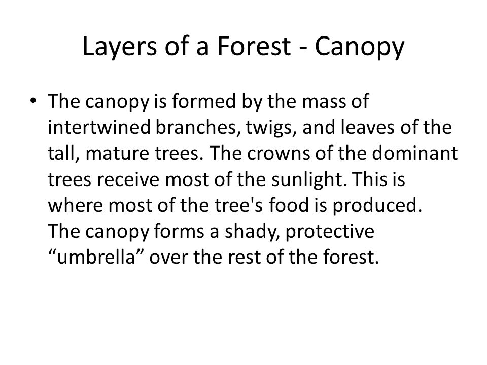 Layers of a Forest - Canopy