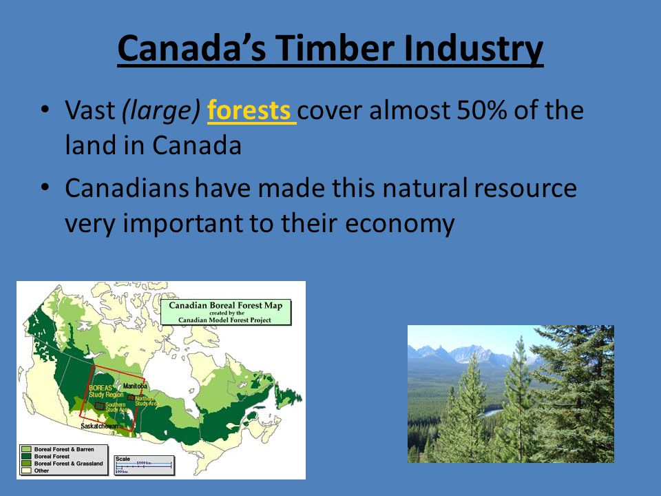 Canada's Timber Industry