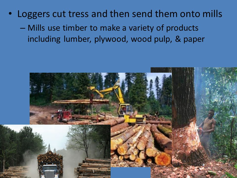 Loggers cut tress and then send them onto mills