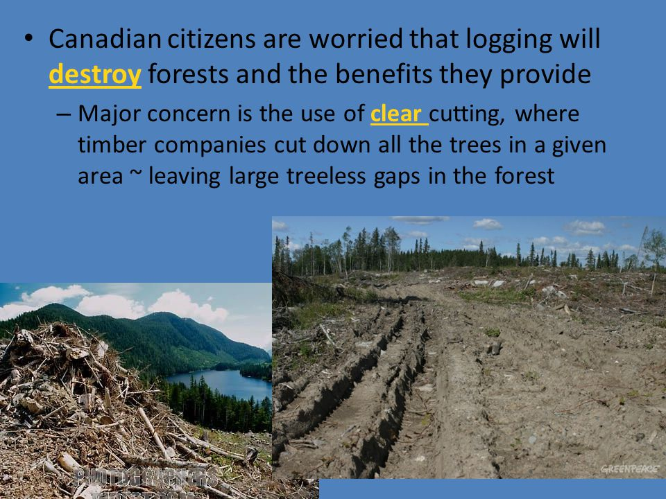Canadian citizens are worried that logging will destroy forests and the benefits they provide