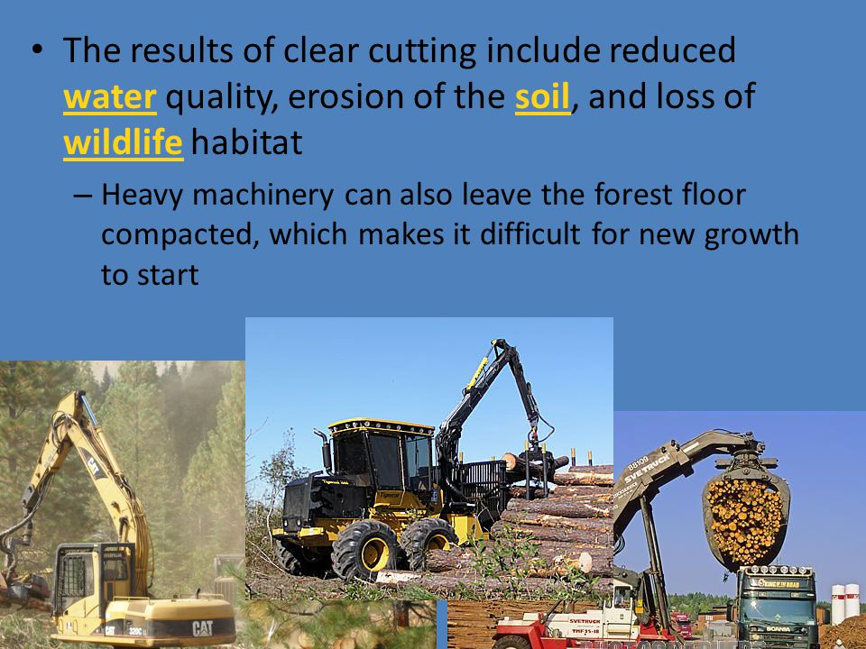 The results of clear cutting include reduced water quality, erosion of the soil, and loss of wildlife habitat