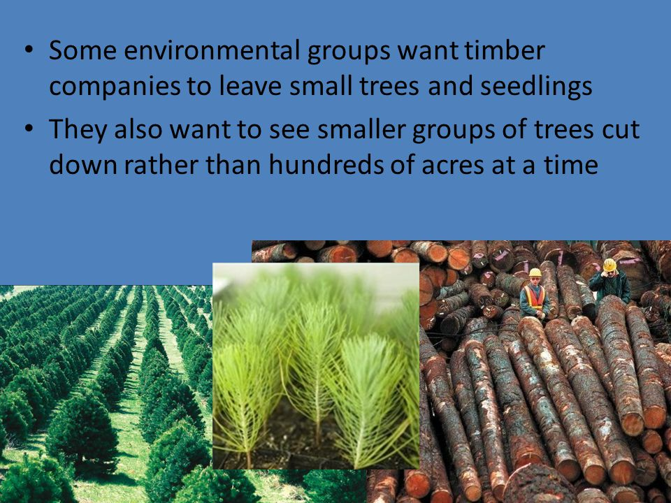 Some environmental groups want timber companies to leave small trees and seedlings
