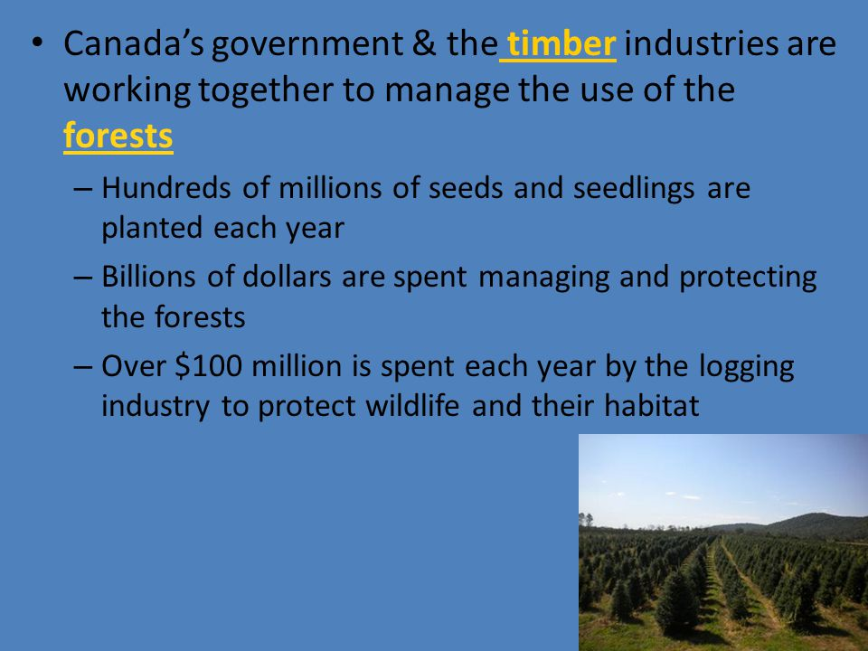 Canada's government & the timber industries are working together to manage the use of the forests