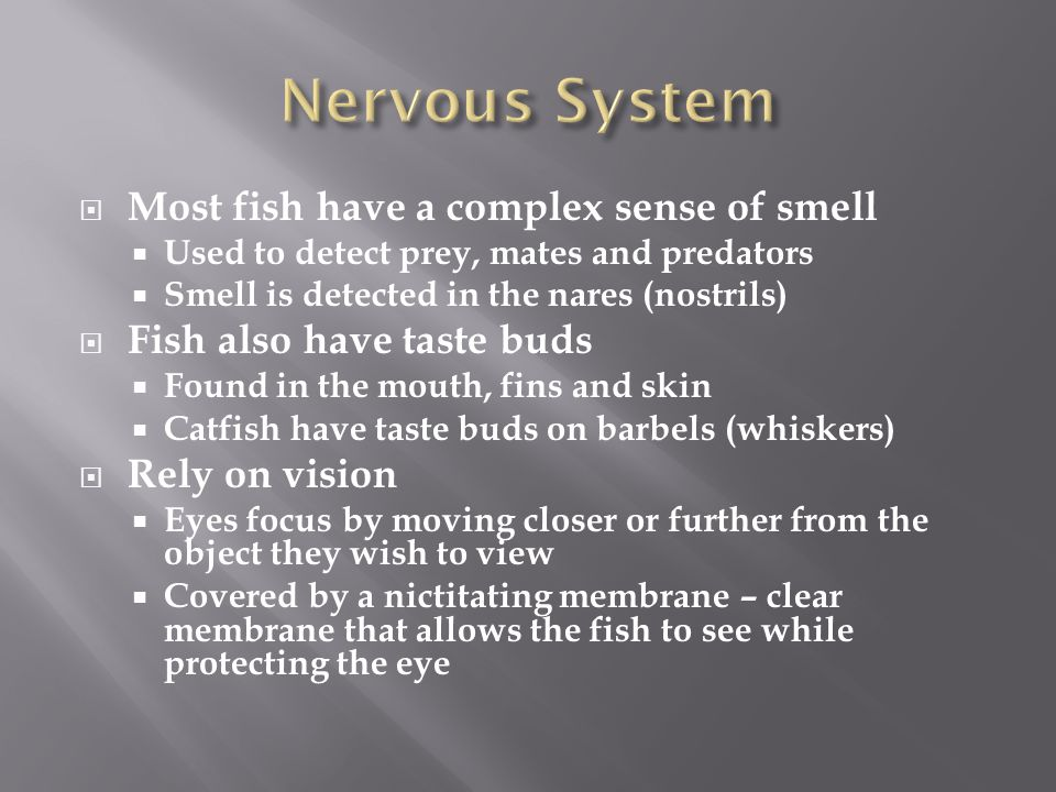 Nervous System Most fish have a complex sense of smell