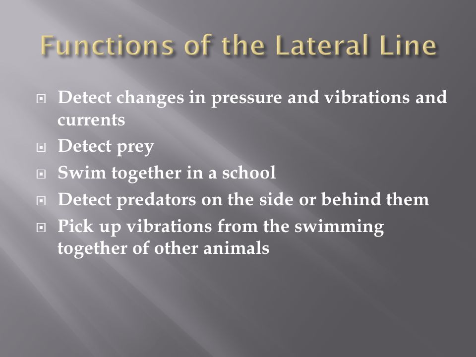 Functions of the Lateral Line