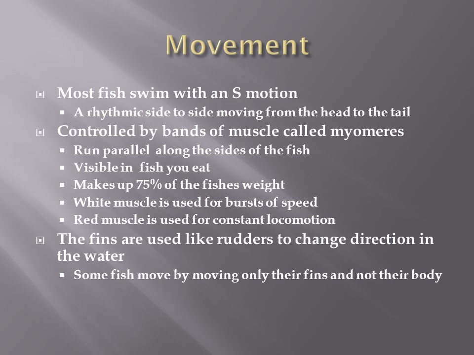 Movement Most fish swim with an S motion