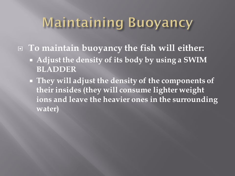 Maintaining Buoyancy To maintain buoyancy the fish will either: