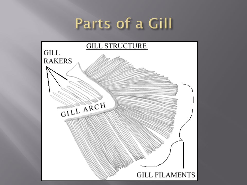Parts of a Gill