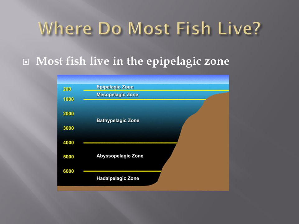 Where Do Most Fish Live Most fish live in the epipelagic zone