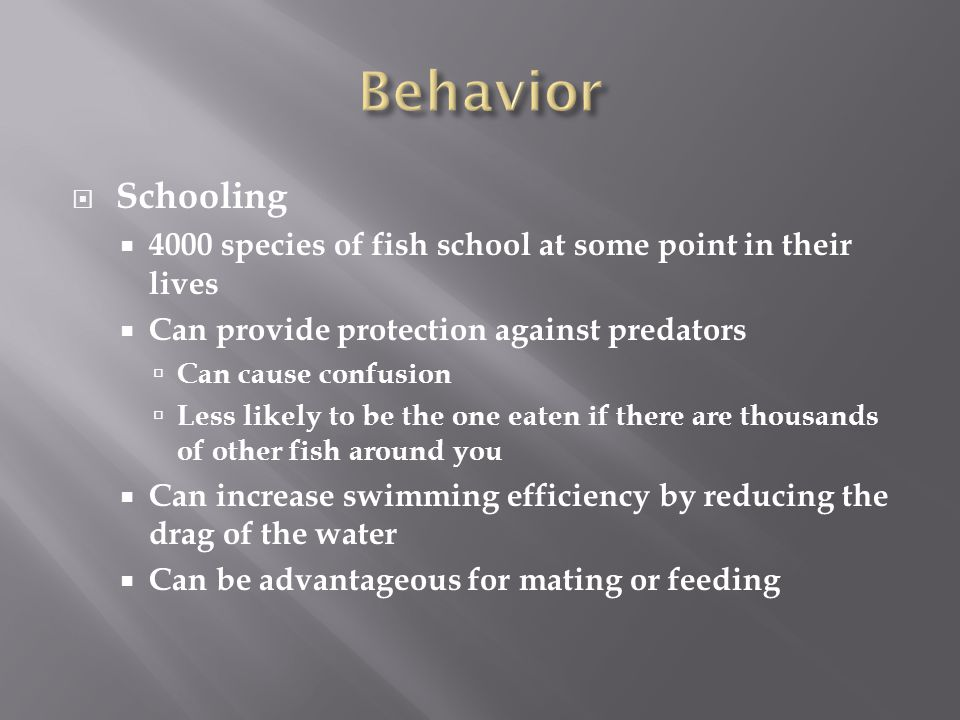 Behavior Schooling. 4000 species of fish school at some point in their lives. Can provide protection against predators.