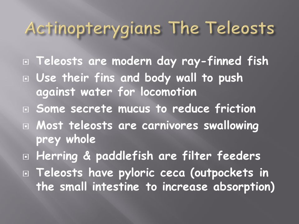 Actinopterygians The Teleosts