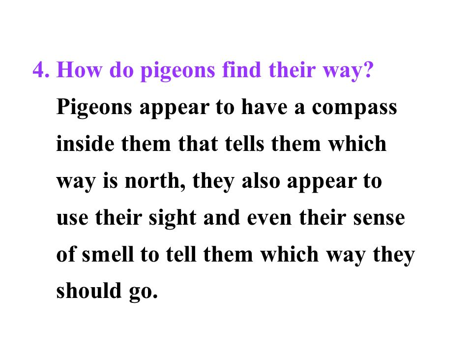 4. How do pigeons find their way