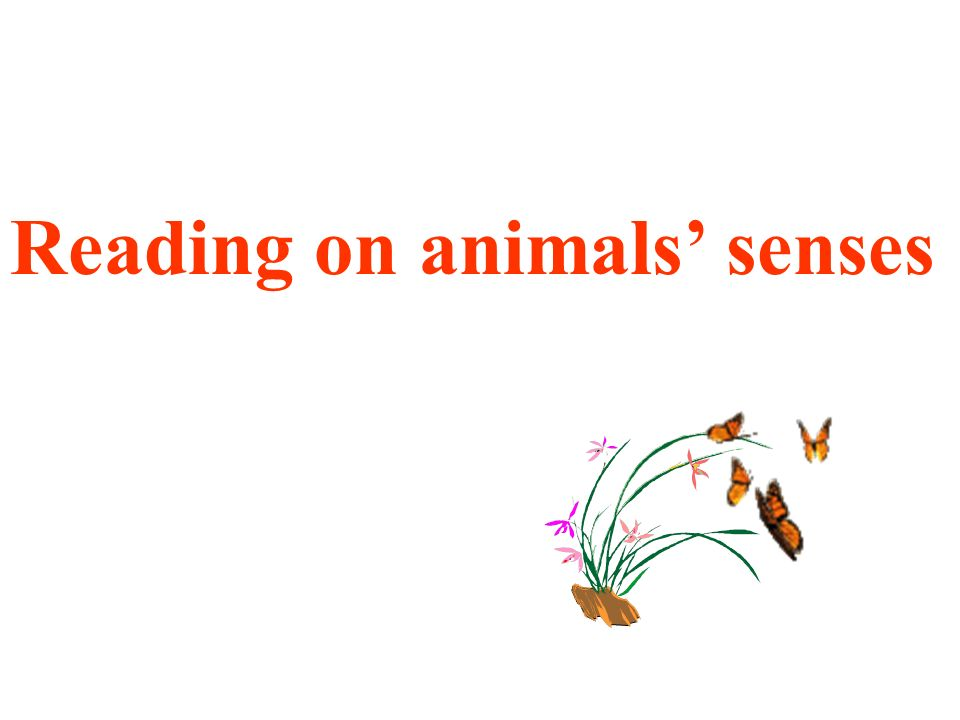 Reading on animals' senses