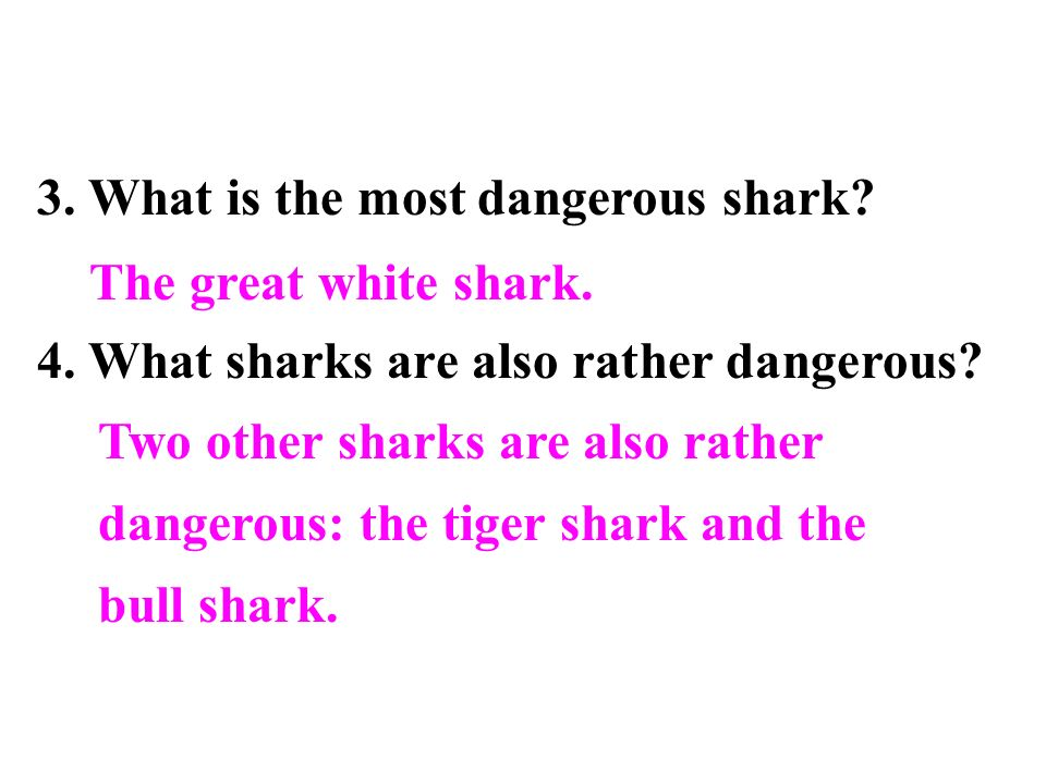 3. What is the most dangerous shark