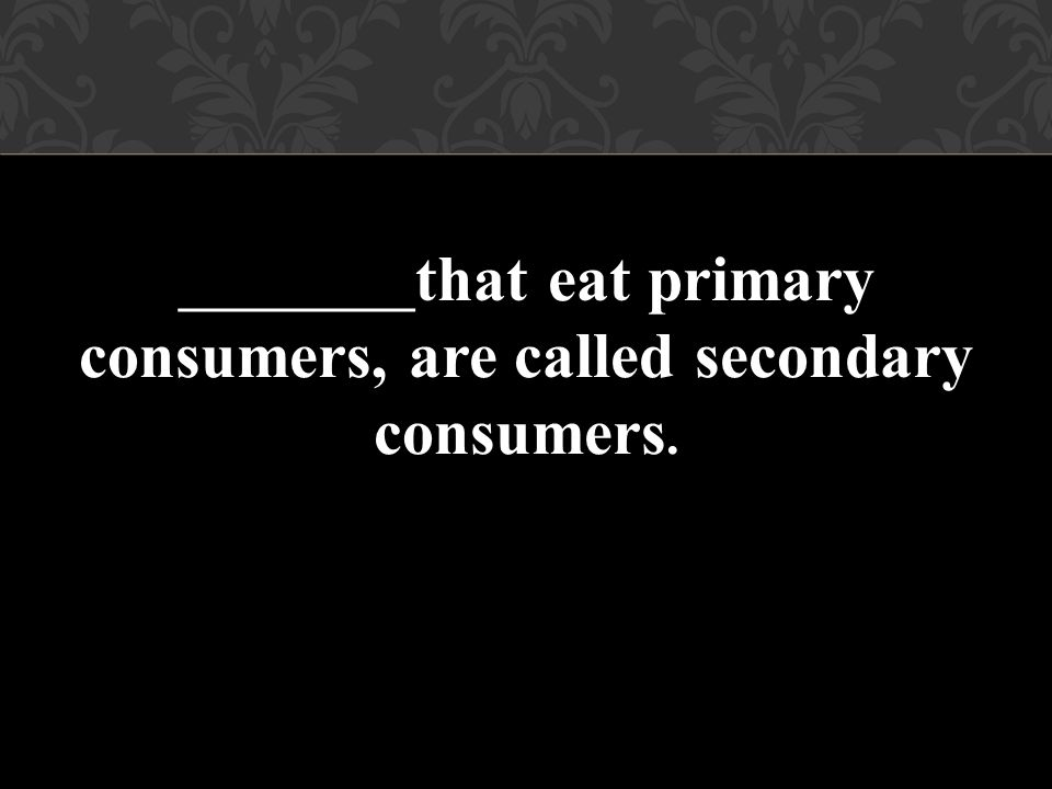 _________that eat primary consumers, are called secondary consumers.