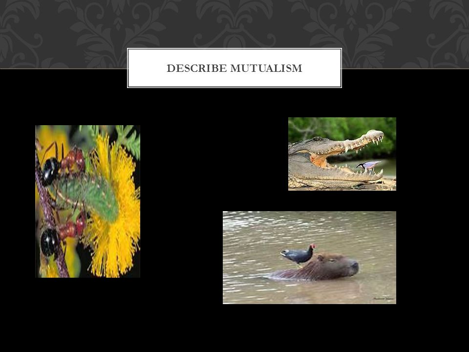 Describe Mutualism