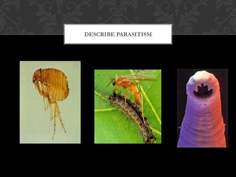 Describe Parasitism