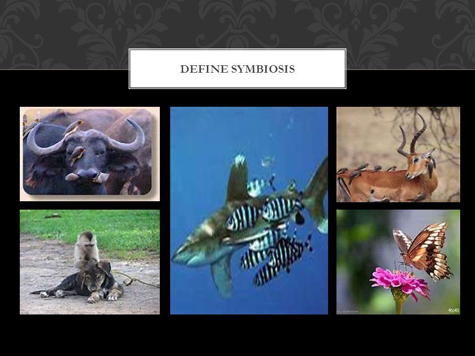 Define Symbiosis
