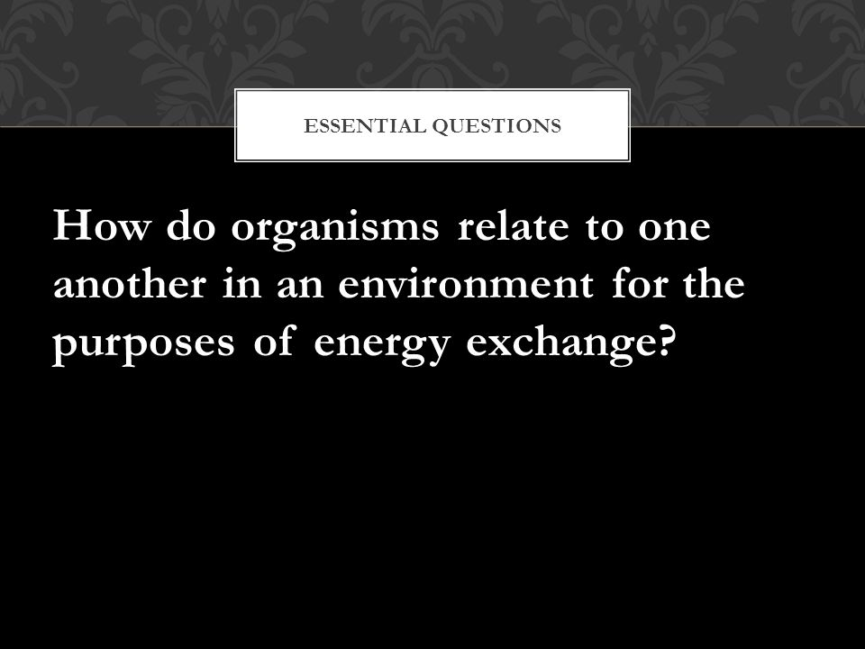 Essential Questions How do organisms relate to one another in an environment for the purposes of energy exchange