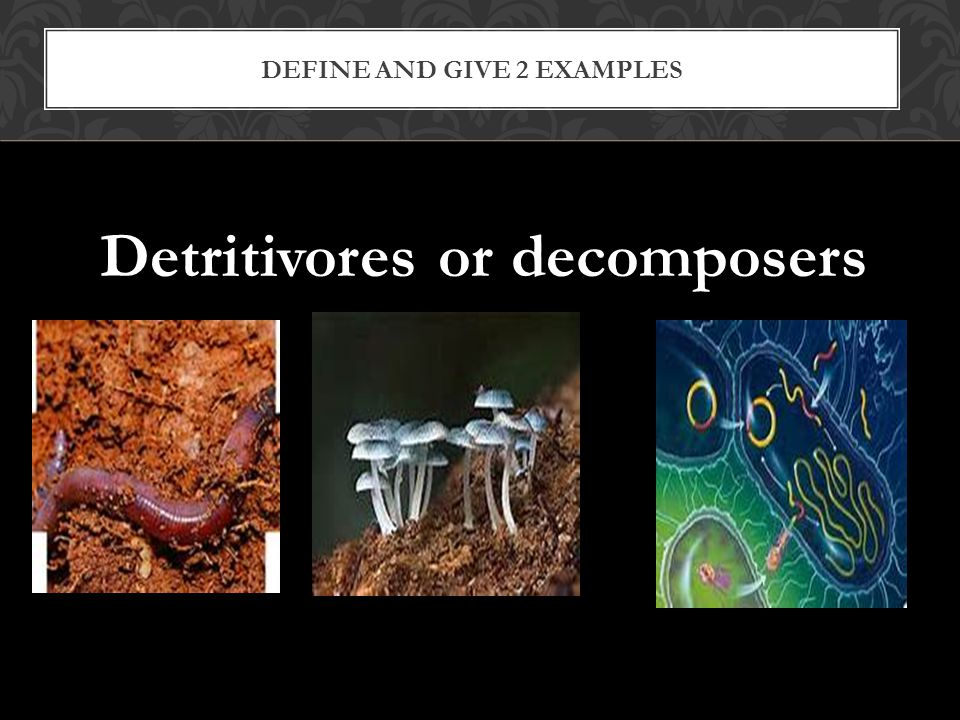 Define and give 2 examples