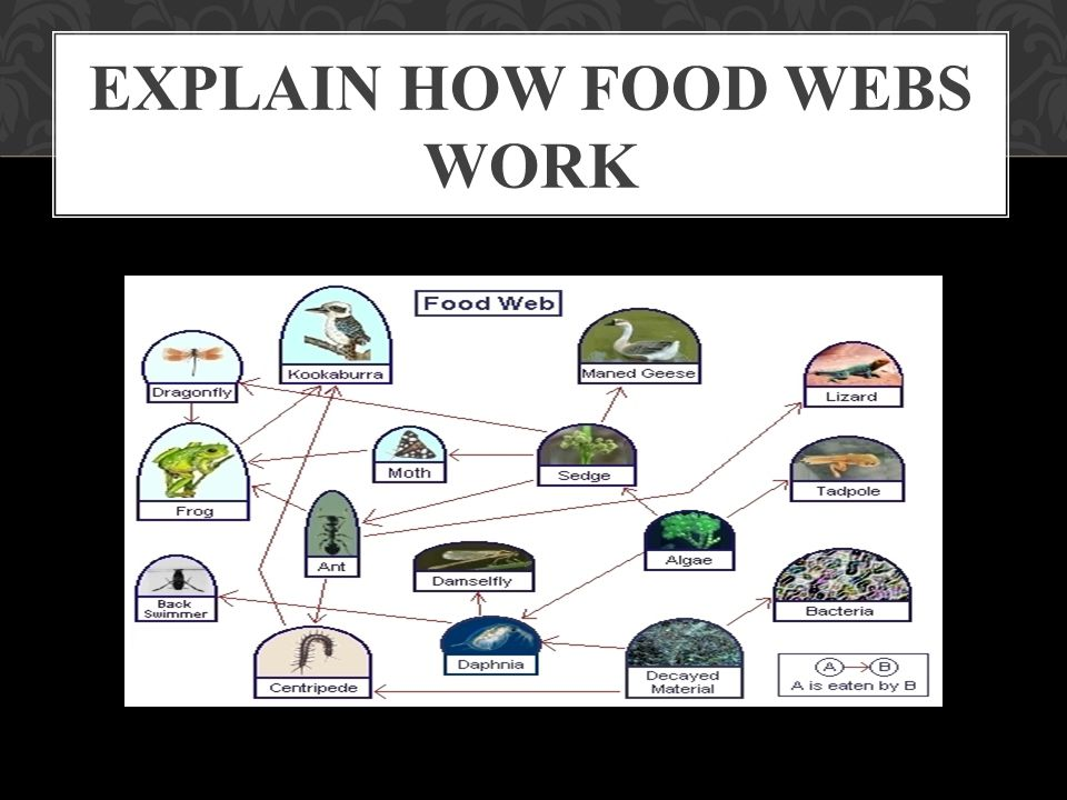 Explain how food webs work