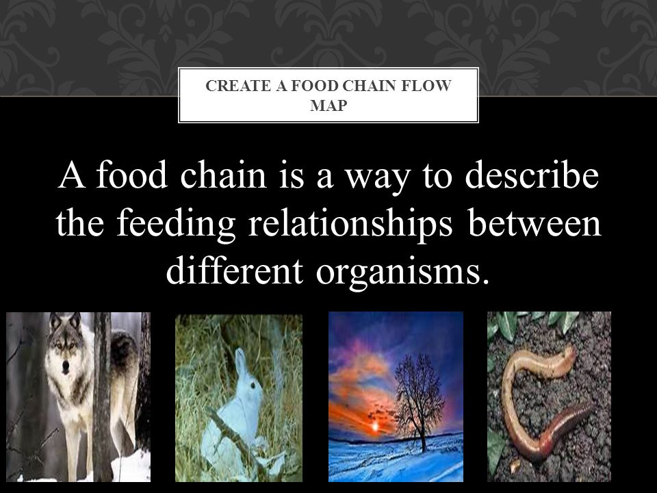 Create a food chain Flow Map