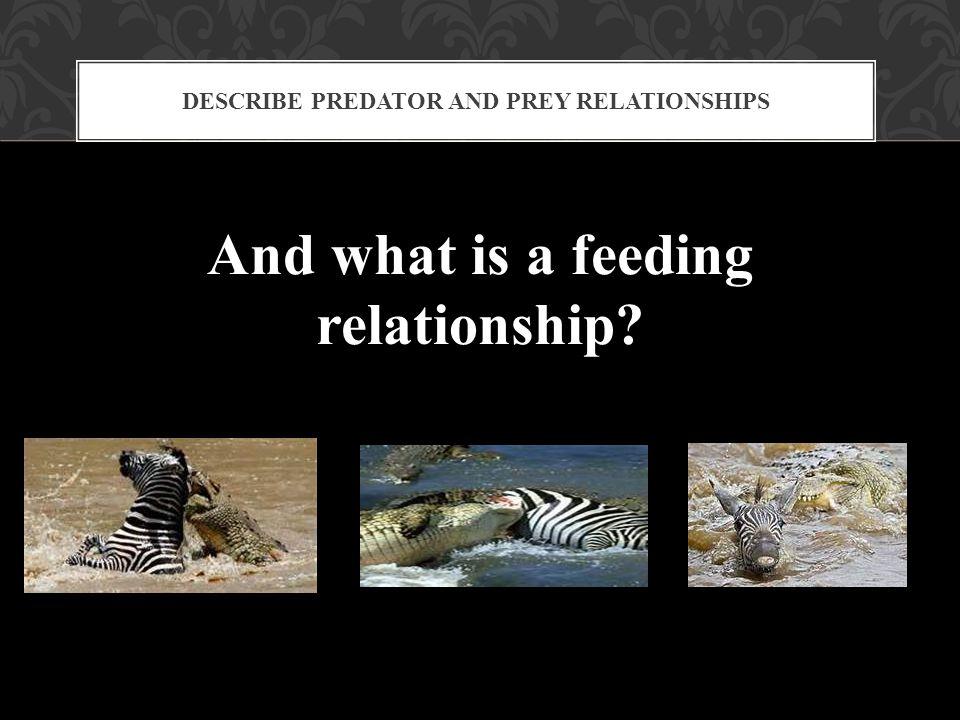 Describe Predator and Prey Relationships