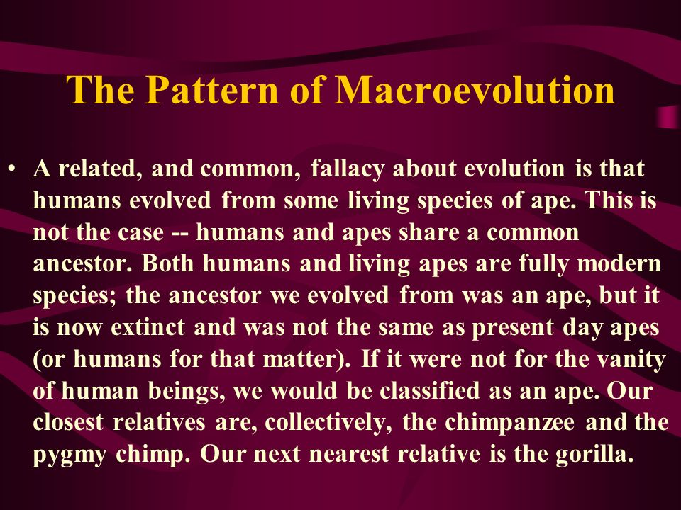 The Pattern of Macroevolution