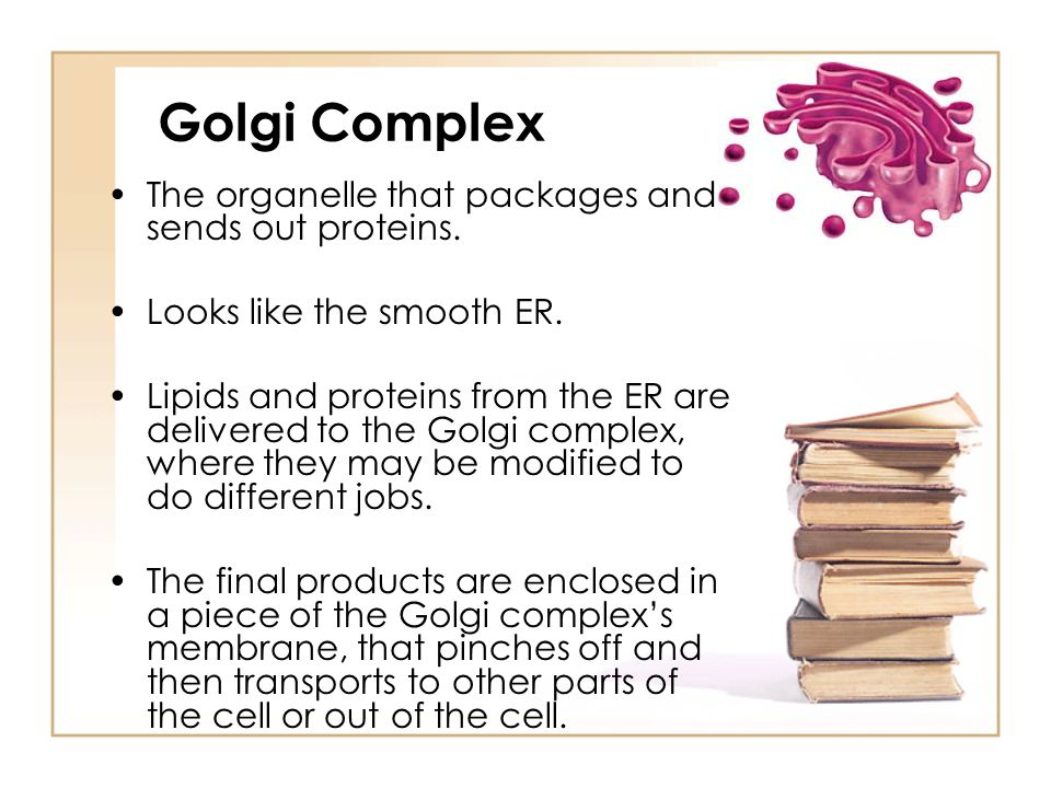 Golgi Complex The organelle that packages and sends out proteins.