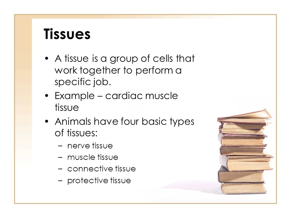 Tissues A tissue is a group of cells that work together to perform a specific job. Example – cardiac muscle tissue.