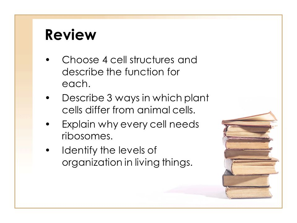 Review Choose 4 cell structures and describe the function for each.