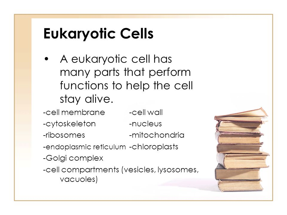 Eukaryotic Cells A eukaryotic cell has many parts that perform functions to help the cell stay alive.