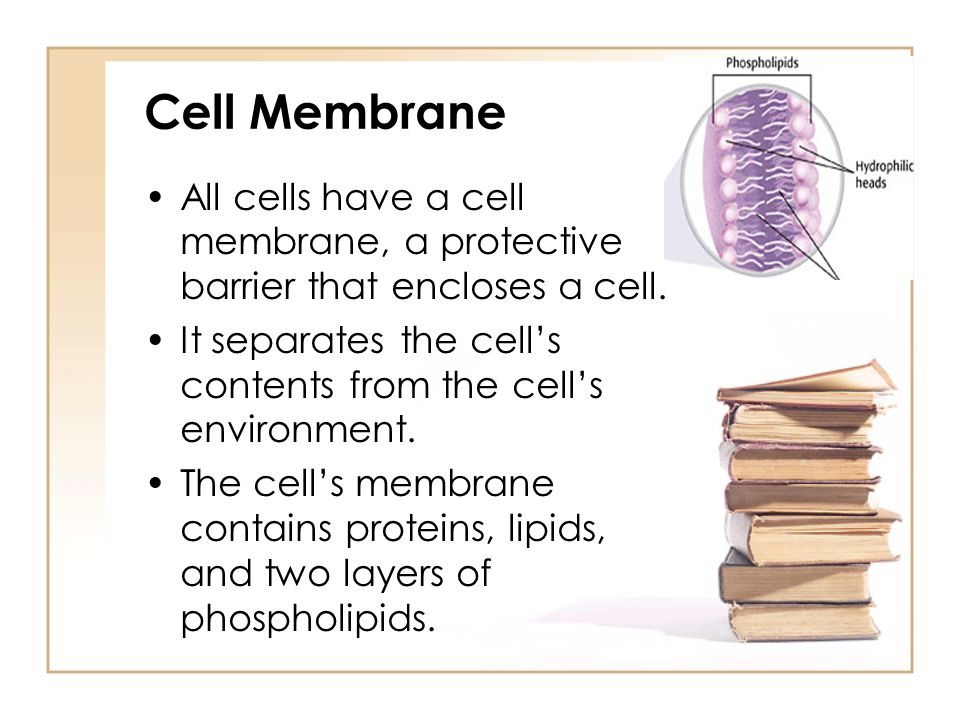 Cell Membrane All cells have a cell membrane, a protective barrier that encloses a cell.