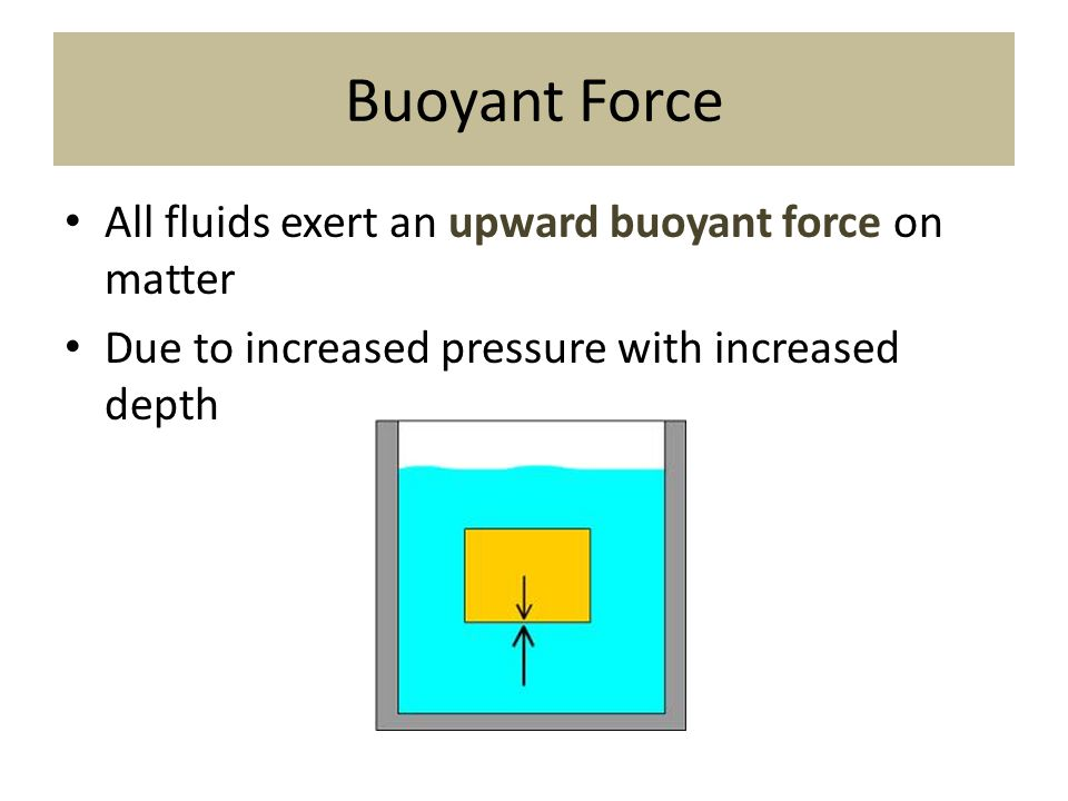 Buoyant Force All fluids exert an upward buoyant force on matter